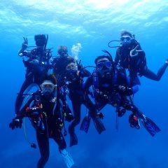 沖縄でウミガメとランデビューのイメージ
