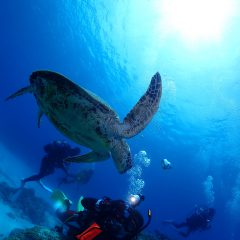 透明度抜群の海でした✨のイメージ