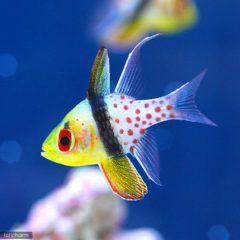 魚の名前シリーズ⑨のイメージ